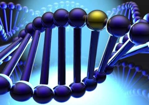 Những bí mật ẩn chứa trong bộ gien người