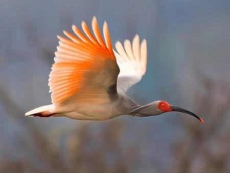Những loài chim hiếm nhất hành tinh