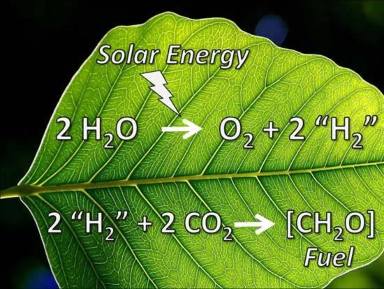 Tạo ra điện năng mới từ lá cây
