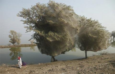 "Xem cây ""ma"" kỳ lạ ở Pakistan"