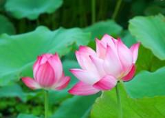 Đạo gia tu luyện cố sự: Lưu Xứ Huyền bị Vương Mẫu quở trách vì chưa bỏ hết sắc tâm