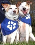 Chuyện cảm động về tình yêu của 2 chú chó