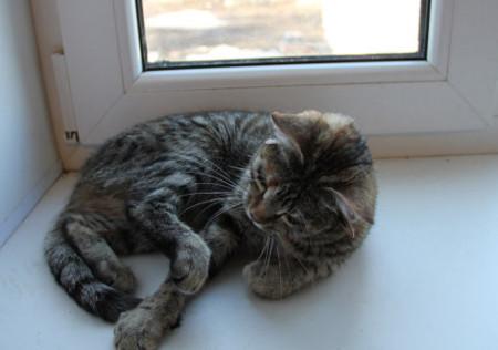 Con mèo có tới 5 tai