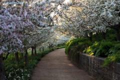 Đẹp ngỡ ngàng thiên nhiên cuối mùa xuân
