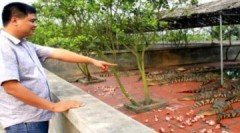 Hiển 'cá sấu' và trang trại bạc tỷ