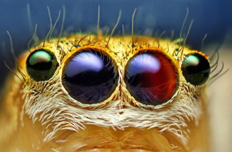 Hình ảnh ngỡ ngàng về mắt động vật