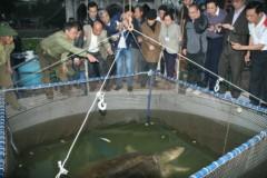 Hồ Gươm có đến 5 cụ Rùa?