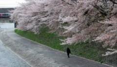 Hoa anh đào – cái đẹp tuyệt mỹ và sự sống mong manh