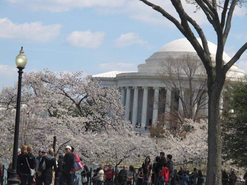 Đền tưởng niệm người viết Tuyên ngôn Độc lập Thomas Jefferrson luôn thấp thoáng màu trắng hồng hoa anh đào