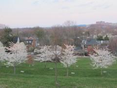 Hoa anh đào nước Mỹ: Chụp đâu cũng đẹp!