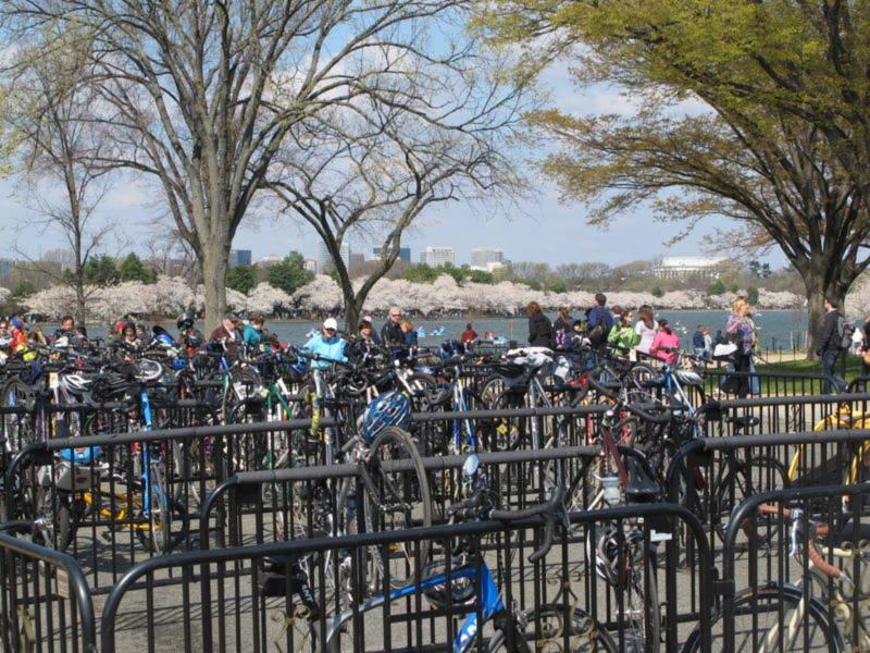 Ôtô bị chắn ở rất xa, chỉ có xe đạp là được khuyến khích đưa người đến xem hoa (bãi gửi và cho thuê)