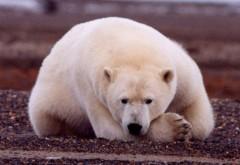 Internet đe dọa các loài vật quý hiếm