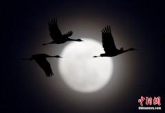 Lại có siêu mặt trăng vào ngày 17.4