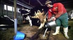 Nhật cân nhắc nhập khẩu gạo, sữa