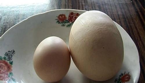 Những quả trứng