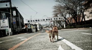 Những 'thành phố ma' ở Nhật Bản