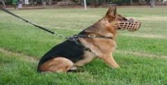 Ra tòa vì nhại tiếng chó sủa