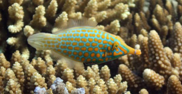 Rực rỡ những sắc màu của đại dương - Tin180.com (Ảnh 11)