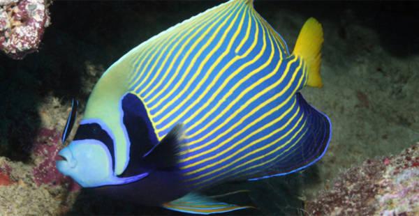 Rực rỡ những sắc màu của đại dương - Tin180.com (Ảnh 13)