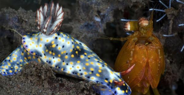 Rực rỡ những sắc màu của đại dương - Tin180.com (Ảnh 4)