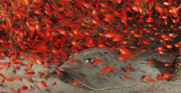 Rực rỡ những sắc màu của đại dương - Tin180.com (Ảnh 6)