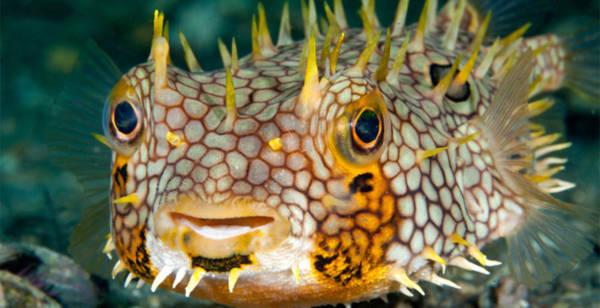 Rực rỡ những sắc màu của đại dương - Tin180.com (Ảnh 9)