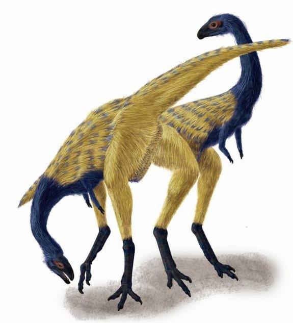 Loài khủng long 3 ngón được xem là loài có những biểu hiện tiến hóa. Đó là sự xuất hiện thêm chi ở phần cánh, giúp loài này dễ dàng khi chuyển từ tư thế nằm sang đứng thẳng.