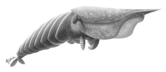 Quái vật Hurdia Victoria là loài động vật ăn thịt, dài khoảng 3,5 m.