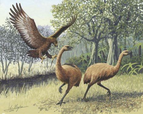 Đại bàng khổng lồ sống cách đây 700 triệu năm, to hơn 40% so với đại bang khổng lồ đang giữ kỉ lục hiện nay – đại bàng Harpy.