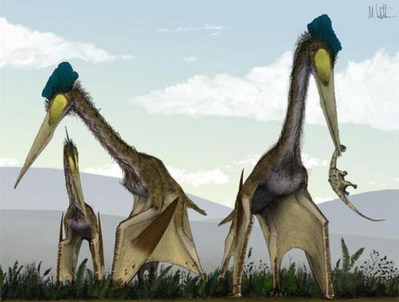 Bò sát Quetzalcoatlus là loài chuyên săn khủng long con để làm bữa trưa.