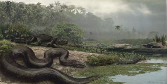 Loài rắn khổng lồ theo ước tính của các nhà nghiên cứu nặng khoảng 1.140 kg và dài khoảng 13 m. Loài rắn này không độc như rắn cuộn mồi, thường sống ở các khu rừng nhiệt đới ở Nam Mỹ khoảng 60 triệu năm về trước.