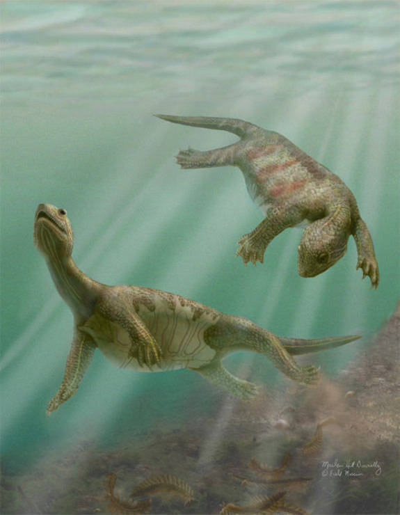 Cho đến ngày nay, loài rùa cổ xưa  nhất được biết đến là loài rùa sống ở vùng biển của Trung Quốc, cách đây 220 triệu năm. Loài này có đặc điểm là bụng được bảo vệ bởi một lớp vỏ, còn lưng thì giống như một chiếc áo giáp.