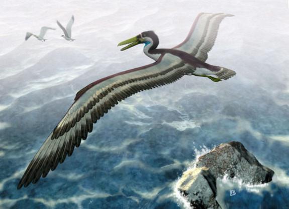 Đây là loài chim cổ đại có kích thước gần bằng chiếc máy bay nhỏ, khu vực sống của nó là nước Anh ngày nay. Loài này sống cách đây 50 triệu năm.