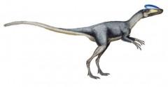 Chiêm ngưỡng bảo tàng khủng long ở Trung Quốc