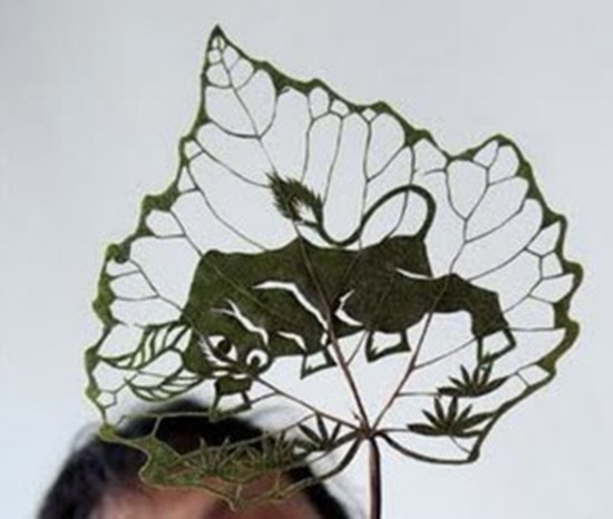 leaf-ar03