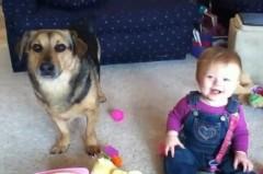 Em bé cười khoái chí khi chú Chó đớp bong bóng