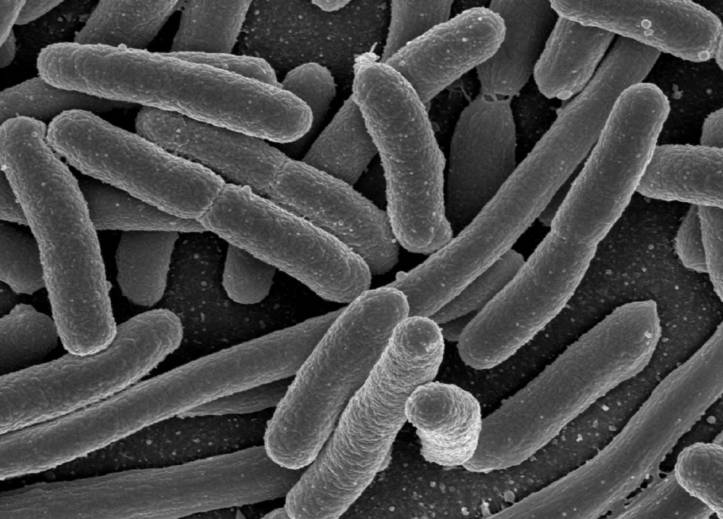 Làm điện điện từ vi khuẩn
