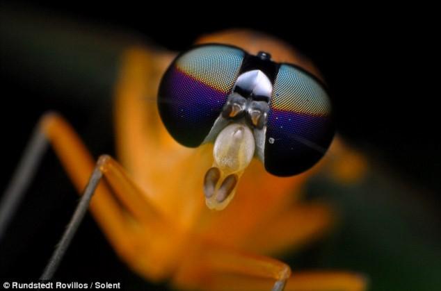 Sinh vật kì lạ có hình thù như sinh vật đến từ hành tinh khác với cặp kính dâm.