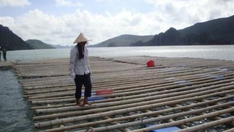 Ngăn ngừa trẻ em chết đuối tại Việt Nam và Châu Á