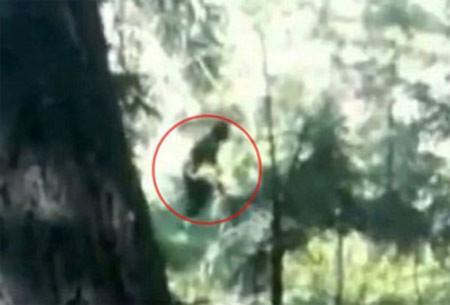 """""""Người rừng khổng lồ"""" gây tranh cãi trên YouTube"""