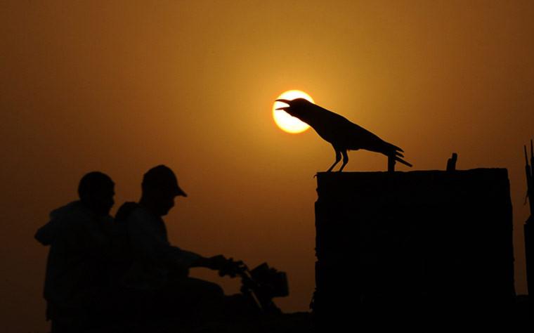 Một con quạ đang kêu dưới nắng hè nóng tới 45 độ C ở Lahore, Pakistan.