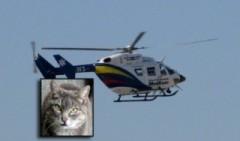 Nhập viện bằng máy bay  vì đánh nhau…với mèo