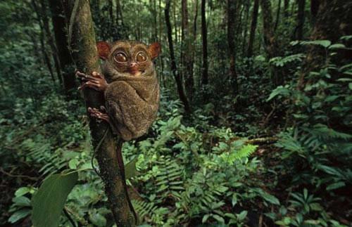 Những loài vật đáng sợ nhất thế giới