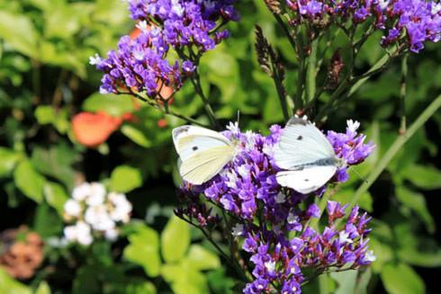 """Danh hiệu """"Garden State"""" dành cho Melbourne quả thật không thiên vị chút nào. Tôi ngày càng tin vào điều đó ở những nơi tôi được đi qua. Như vườn hoa ở công viên Fitzroy với những bông hoa màu sắc lung linh trong nắng và những chú bướm chao nghiêng yên bình đến nao lòng."""