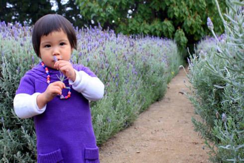 Bản thân tôi cũng cảm thấy ngất ngây với mùi oải hương thơm ngát, trong lần đầu tiên đến vườn oải hương lớn đến thế trong đời mình (ảnh chụp ở Lavender Farm, Mornington Peninsula)