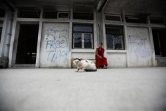 Sư Tây Tạng ngồi suy tư bên chú mèo