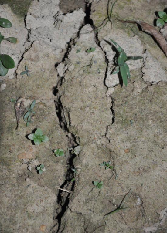 Vết nứt chạy dài gần 50 m. Ảnh: Minh Chiến