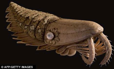 """Tìm thấy hóa thạch """"quái vật"""" giống tôm thời tiền sử"""