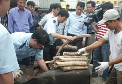 Truy tìm đường đi của ngà voi nhập lậu