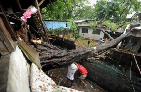 Trên đường phố, cây to như thế này cũng bật gốc, đè vào nhà dân. Ít nhất 15 người đã thiệt mạng trong bão Meari ở Philippines.